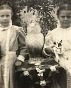 Antique Rppc Postcard Awesome Halloween Owl Pug Dog Toy Miss Pearl Sadie Doll