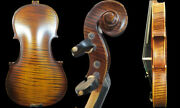 Strad Style Song Brand Master Violin Of Concert 4/4100 Years Spruce Top 14807