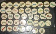 Jello Picture Wheels - Lot Of 40 Various Automobiles