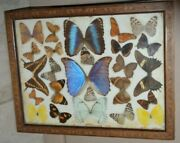Real Butterflies Moths Display Taxidermy Glass Box Frame Variety