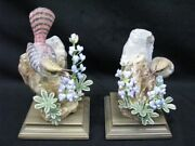 Pair Of Royal Worcester Dorothy Doughty Canyon Wren W/ Wild Lupin Mint 1950's