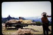 Shirtless Cowboy Men Working On A Farm In 1950and039s Kodachrome Slide Dia F16b