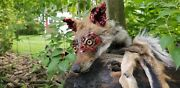 Zombie Juvenile Eastern Coyote Head Only Mount Taxidermy Decor Novelty Pelt Fox