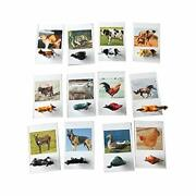Animal Model Card - 12 Sets Of Miniature Farm Animal Toy Figurines With
