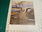 Vintage 1941 Goose Print Lynn Bogue Hunt--white Fronted Greater Snow Canada