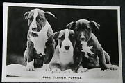 Bull Terrier Puppies  Vintage Black And White Photo Card  Vgc