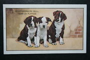 Staffordshire Bull Terrier Puppies  Original 1930's Vintage Illustrated Card