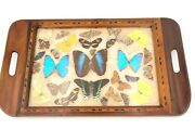 Vintage Real Butterfly Specimen Taxidermy Blue Morpho Swallowtail Serving Tray