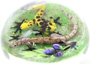 Large Fascinating Jim D'onofrio Spotted Frog Brown Lizard Art Glass Paperweight
