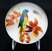 Delightful Magnum Rick Ayotte Multicolored Parrot Bird Art Glass Paperweight