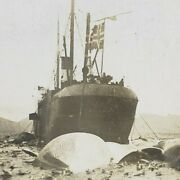 Norway Spitzbergen Floating Whale Station Whaling Ship Whaler Stereoview E287
