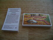 Incredible Creatures Full Set By Brooke Bond Tea Picture Dept Po Box 86 Address