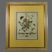 Antique 18th Century Hand Colored Botanical Copper Plate Engraving Moses Harris