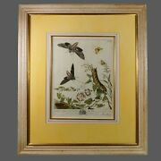 18th Century Moses Harris Botanical Hand Colored Copper Plate Engraving C 1766