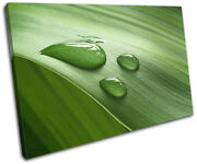 Grass Water Drops Floral Single Canvas Wall Art Picture Print