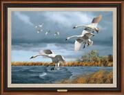 Trumpets Of Autumn - Swans Framed Limited Edition Canvas By David A. Maass