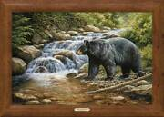 Shadow Of The Forest - Black Bear Framed Gallery Canvas By Rosemary Millette