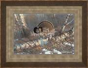 Woodland Strut - Grouse Framed Limited Edition Print By Michael Sieve