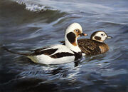 Persis Clayton Weirs Old Squaw Ducks 1992 Maine Duck Stamp Print