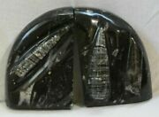 Moroccan Goniantite Fossil Ammonite Black Marble Bookends