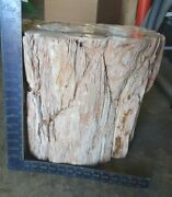 Side Table/base Petrified Wood Fossil Indeterminate Age Color Tan/beige