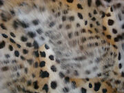 Genuine Spotted Fur Throw Blanket Dyed As Ocelot 44 By 61 Soft And Cuddly