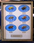 Atlantic Salmon Fly Frame 6 Flies From George Kelsonand039s The Salmon Fly Plate 5