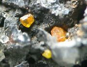 Fine Stolzite Crystals On Manganese Ore From Broken Hill, Nsw, Australia