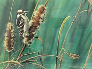 Bruce Langton Momentandrsquos Rest Downy Woodpecker Signed Numbered Art Print 299/300