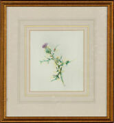 Iona Clare Hordern - Signed And Framed 1993 Watercolour The Thistle