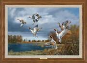 Rapid Ascent - Pintails Framed Limited Edition Canvas By David A. Maass