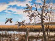 Pride Of The East - Black Ducks Limited Edition Canvas By David A. Maass