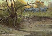 Cutbank - Zebras Limited Edition Canvas By Ron Van Gilder