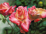 Virgia West My Sister's Garden Pink Roses Original Oil Painting On Canvas18x24
