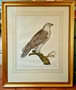 Orig. First Edition John Shelby Jer Falcon/gyrfalcon Hand-colored Engraving