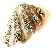 Natural Large Tridacna Gigas Clam Shell