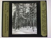 Vintage Glass Magic Lantern Slide New York Forest By Mount Marcy 1919