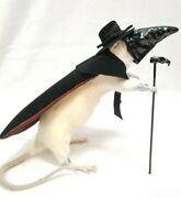 Taxidermy Gaff- Plague Doctor Rat Rogue Squirrel Oddities Pandemic