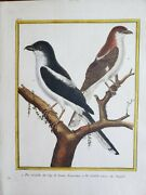 Martinet And Buffon Antique Hand Colored Birds Engraving Pl 477 Two Pie-griêche