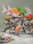 Original Art Painting Squirrel Fish By Walter Weber Signed Dated 1929 Gouache