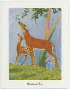 Vintage Whitetail Deer Fawn Doe Tree Nature Print 1 Horse Colt Foal Sepia Card