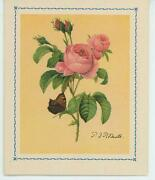 Vintage Pink Roses Butterfly Pierre Joseph Redoute Card Art Lithograph Old Print
