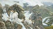 Ron Van Gilder High Life - Dall Sheep Artistand039s Proof On Paper Remarqued