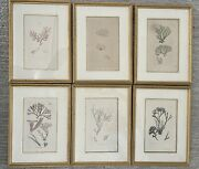 Sowerby Botanical Hand Colored Art Engravings Early 19th C. Set Of 6 Antique