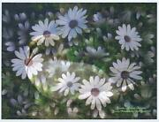 Swans African Daisy Daisies Garden 8.5 X 11 Hand Signed By Artist Fantasy Print