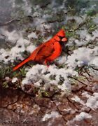 Owen Gromme Flash Of Red Cardinal Signed Limited Edition On Paper