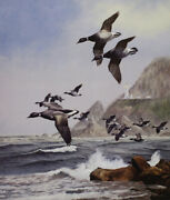 David Maass Black Brant Pacific Flyway Artistand039s Proof On Paper