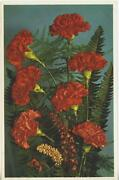 Vintage Red Carnations Flowers Green Ferns Lithograph Postcard Art Print Unused