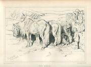 Antique Belgium Horses Equestrian Saddle Barn Stable Country Farm Liege Print
