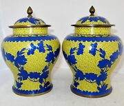8.5 Pair Of Antique Chinese Yellow And Blue Cloisonne Ginger Jars With Flowers